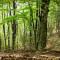 Cultura. La poesia di Giorgio Caproni e i danni degli stravolgimenti ecologici