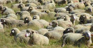 Appennini. La riscoperta della cultura dei pastori