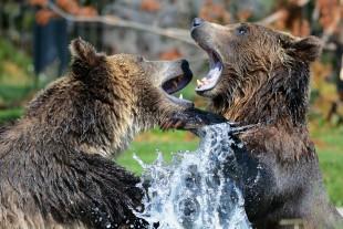 Cultura. Guerriero e madre, il duplice nella natura simbolica dell'Orso