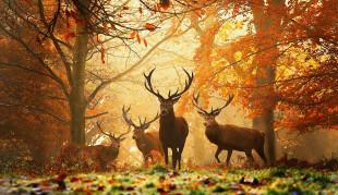 Cultura. Il simbolismo del cervo, il re della foresta