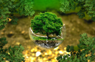 Ecologia unica via