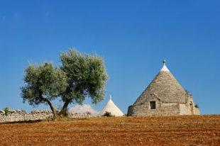 Ulivi e trulli in Puglia