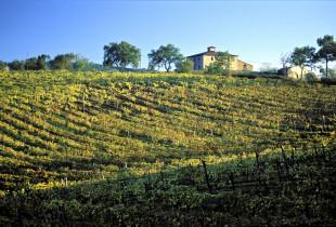 Vini Di(vini). Tra vigne, mosti e colline del Morellino di Scansano