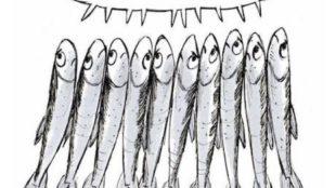 Politica (di G. Del Ninno). Se la piazza delle Sardine testimonia la sofferenza della democrazia rappresentativa